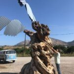 niki olive tree trunk